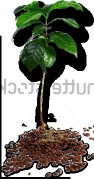 standard-tree.png